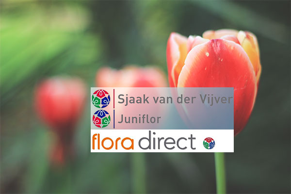 florists supplies link to login to Holland Flora Direct webshop showing flora direct logo and tulips